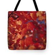 Close-up Of Autumn Leaves Tote Bag