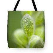 Close-up Of Flower Buds Tote Bag