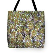 Close-up Of Open Coral Polyps, Papua Tote Bag
