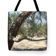 Close Up Olive Tree Tote Bag