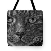 Close Up Portrait Of A Cat Tote Bag