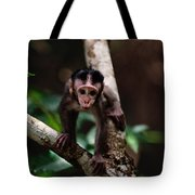 Close View Of A Baby Macaque Tote Bag