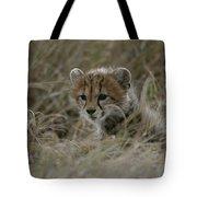 Close View Of A Juvenile Cheetah Tote Bag