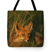 Close View Of A Red Fox At Rest Tote Bag
