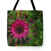Close View Of A South African Daisy Tote Bag
