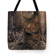 Close View Of A Tabby Cat Tote Bag