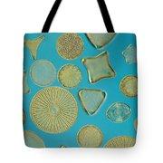 Close View Of Diatoms Tote Bag