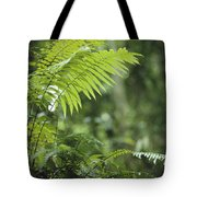 Close View Of Ferns In A Papua New Tote Bag