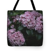 Close View Of Flowering Mountain Laurel Tote Bag