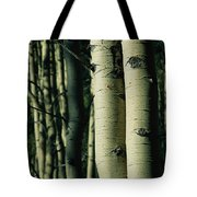 Close View Of Several Aspen Tree Trunks Tote Bag