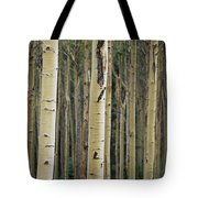 Close View Of Tree Trunks In A Stand Tote Bag