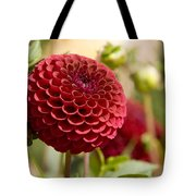Closeup Of A Red Flower In Butchart Tote Bag