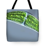 Closterium Lunula Tote Bag by M. I. Walker