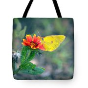 Clouded Sulphur Butterfly Square Tote Bag