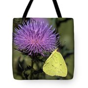 Cloudless Sulphur Butterfly Din159 Tote Bag