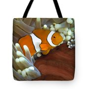 Clown Anemonefish In Anemone, Great Tote Bag