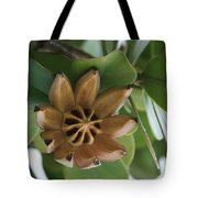Clusia Major -  Autograph Tree Tote Bag