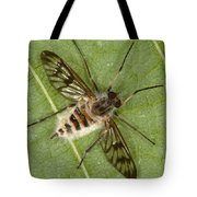 Cluster Fly Killed By Parasitic Fungus Tote Bag