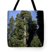 Coast Redwood Tote Bag
