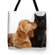 Cocker Spaniel Puppy And Maine Coon Tote Bag