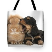 Cockerpoo Pup And Lionhead-lop Rabbit Tote Bag