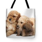 Cockerpoo Puppies And Rabbit Tote Bag