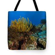 Colony Of Crinoids, Papua New Guinea Tote Bag