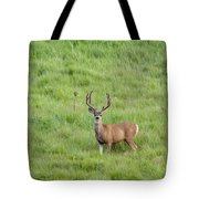 Colorado Deer Tote Bag