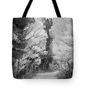 Colorado Rocky Mountain Aspen Road Portrait Bw Tote Bag