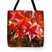 Colorful Fall Tree Red Leaves Art Prints Tote Bag
