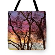 Colorful Silhouetted Trees 37 Tote Bag