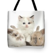 Colorpoint Kitten With Baby Rabbits Tote Bag