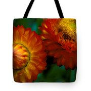 Colors Of Fall Tote Bag by Kathy Yates