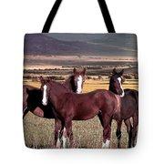 Colt Trio Tote Bag