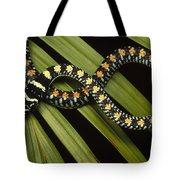 Colubrid Snake Boiga Sp A Flying Snake Tote Bag