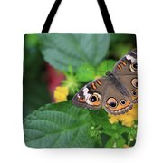 Common Buckeye II Tote Bag