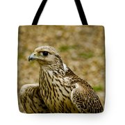 Common Female Kestrel Tote Bag