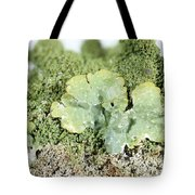 Common Greenshield Lichen Tote Bag by Ted Kinsman