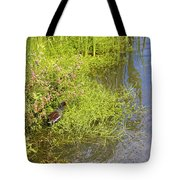 Common Moorhen At The Waters Edge Tote Bag