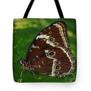 Common Morpho Tote Bag
