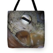 Common Octopus Octopus Vulgaris Close Tote Bag