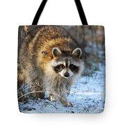 Common Raccoon Tote Bag