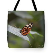 Common Tiger Glassywing Tote Bag