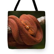 Common Tree Boa Corallus Hortulanus Tote Bag