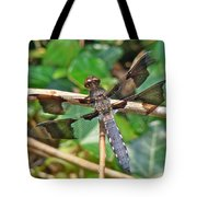Common Whitetail Dragonfly - Plathemis Lydia - Male Tote Bag