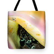Conch Eyes Tote Bag