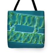 Conjugation In Algae, 2 Of 4 Tote Bag