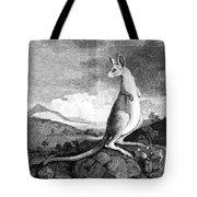Cook: Kangaroo, 1773 Tote Bag