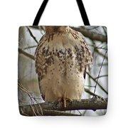 Cooper's Hawk 1 Tote Bag