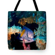 Coral Reef In Red Sea Tote Bag